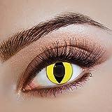 Couleur des lentilles de contact Cat Run de aricona – années couvrant la lentille à terme pour les yeux sombres et claires- sans correction- les lentilles colorées pour le carnaval- des soirées à thème et des costumes d'Halloween