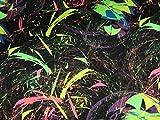 Leinen Lodge Baumwoll Jersey Neon Liebe Feuerwerk auf schwarz *** 50 cm x 150 cm ***