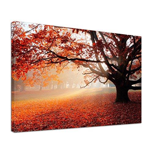Leinwand Bild edel Natur Eiche im Herbst Größe 60 x 40 cm