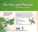 Wegweiser durch die Natur: Die Tiere und Pflanzen Mitteleuropas - .