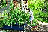 Koll Living Rankhilfe für Kletterpflanzen - jetzt einfach eigenes Gemüse, Kräuter oder Blumen auf dem Balkon, der Terrasse oder im Garten züchten