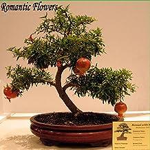 Arboles frutales enanos for Lista de arboles perennes