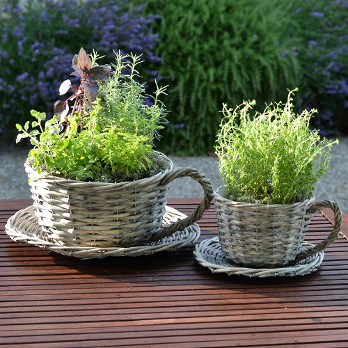 Plant Theatre 2 Willow Teacup Planters – Gift Boxed – Ideal Gift