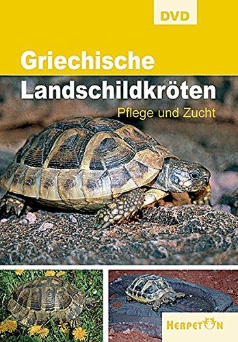 Griechische Landschildkröten - Pflege und Zucht