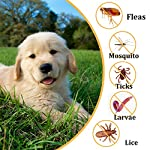 xcool flea and tick collar for dogs and cats, safe and healthy natural formula waterproof flea collar to kills repels mosquitoes ticks, 20 inch 90 days protection (19.7 inch) XCool Flea and Tick Collar for Dogs and Cats, Safe and Healthy Natural Formula Waterproof Flea Collar to Kills Repels Mosquitoes Ticks, 20 inch 90 days Protection (19.7 inch) 61ch5rHRbJL