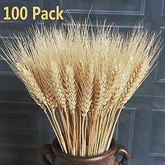 100 x realistas Trigo Artificial Ramo de Flores secas, Ramo de Flores secas decoración, Accesorios de Tiro para Boda Fiesta (100 Tallos de Ramo)