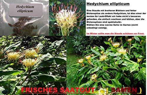 4x-hedychium-ellipticum-flores-del-jardin-planta-planta-ornamental-semillas-habitacion-neu-269