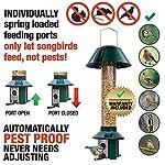 Squirrel Proof Wild Bird Feeder - Roamwild PestOff (Mixed Seed / Sunflower Heart Feeder) 10