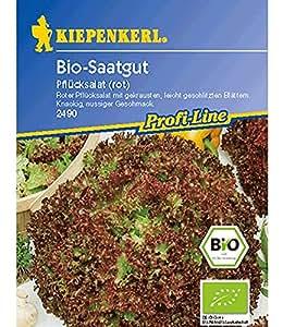 BIO-Salat Pflücksalat, rot,1 Portion
