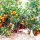 Shopmeeko 20 stücke lemon tree bonsai günstige obstpflanze diy hausgarten bonsai essbare grüne riese zitrone: grün
