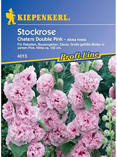 Stockrose 'Chaters Double