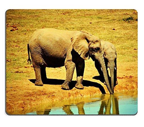 Elefant Tiere Afrika Safari National Park Wilderness QZONE Made, um Bestellung Reinigungstuch mit Neopren Gummi Maus Pads (Tiere National Park)
