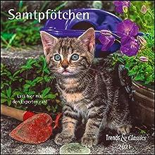 Samtpfötchen 2021 - Broschürenkalender - Wandkalender - Katzenkalender - mit herausnehmbarem Poster - Format 30 x 30 cm