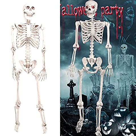 HALLOWEEN NEW POSEABLE HUMAN SKELETON 160CM FULL LIFE SIZE PARTY PROP DECORATION