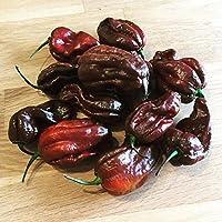Habanero Chokolate >Chili Ultrascharf< Samen 10 Stk