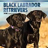 Black Labrador Retrievers - Schwarze Labradore 2018-18-Monatskalender mit freier DogDays-App: Original BrownTrout-Kalender [Mehrsprachig] [Kalender] (Wall-Kalender)