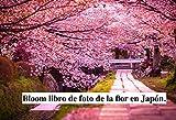 Bloom libro de foto de la flor en Japón. (Spanish Edition)