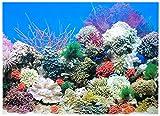 Rückwandfolie 80cm x 60 cm Rückwandposter für Aquarien