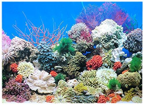 Rückwandfolie 200cm x 60 cm Rückwandposter für Aquarien