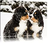 Bernersennen Hunde Welpen im Schnee Format: 80x60 auf Leinwand, XXL riesige Bilder fertig gerahmt mit Keilrahmen, Kunstdruck auf Wandbild mit Rahmen, günstiger als Gemälde oder Ölbild, kein Poster oder Plakat