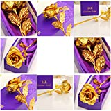 #3: House of Quirk Great Valentine's Gift 24K Gold Rose With Gift Box And Carry Bag - Best Gift For Loves Ones, Valentine's Day, Mother's Day, Anniversary, Lover's Flower Gold Dipped Rose With Gift Box For Women Girls Gifts. (GOLD)