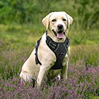 Rabbitgoo DTCW006XL, Rabbitgoo Adjustable Refletive Dog Harness No-Pull Outdoor Pet Vest with Handle Easy Control for Large Dogs & Durable Material Black (Pet Supplies)