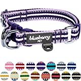 Best Blueberry Avec Blueberries - Blueberry Pet - Collier martingale à rayures multicolores Review