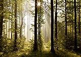 Carta da parati fotografica FTS 0181, motivo: fiabe foresta domani