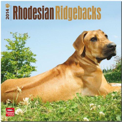 Rhodesian Ridgebacks 2014 - Afrikanischer Löwenhund: Original BrownTrout-Kalender [Mehrsprachig] [Kalender]