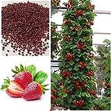 Vasuworld Attractive Climbing Strawberry Tree-Plant Seeds