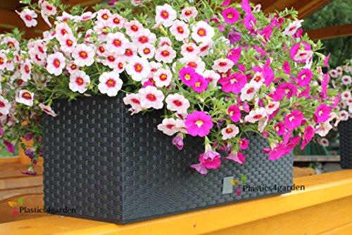 Color mimbre olla baja para macetero de flores + maletero 50 cm 17 litros (drtc500)