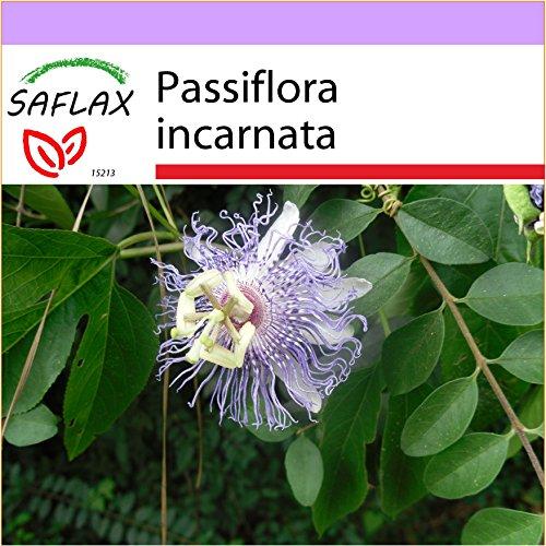 SAFLAX - Flores pasión - 5 semillas - Passiflora
