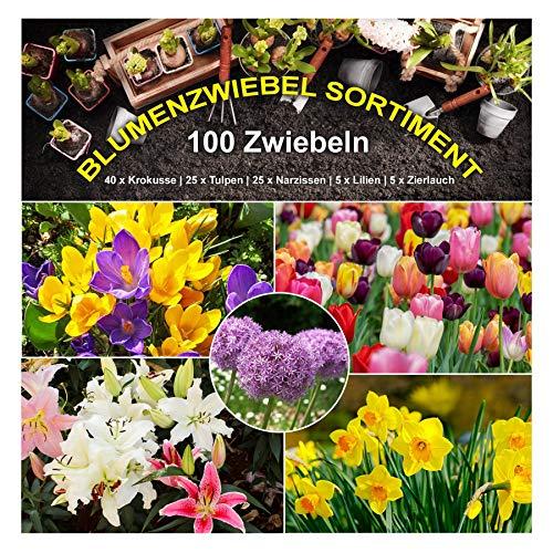 100 x Blumenzwiebel Garten Sortiment - 5 Sorten Mix beliebte Frühlingsblüher - mehrjährig - winterhart - SAISONWARE - NUR KURZE ZEIT ERHÄLTLICH
