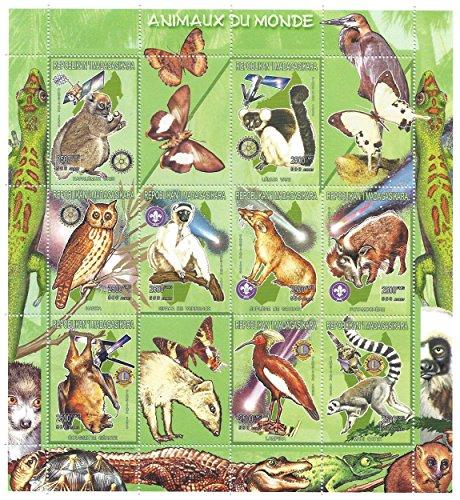 Gli animali della grande natura da collezione