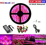 Topled Light Luce Crescita Piante, LED Grow Striscia per Piante con Adattatore di Alimentazione, Fpettro Completo SMD 5050 Red Blue 4:1 Luce di Corda per La Serra per Acquari Hydroponic Pant Garden Flowers Veg Grow Light (5M)