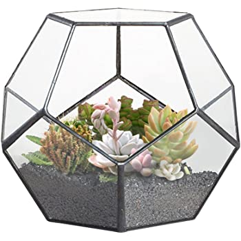 jincao terrarium en forme de dod ca dre et plaques de verre pentagonales pour plante transparent. Black Bedroom Furniture Sets. Home Design Ideas