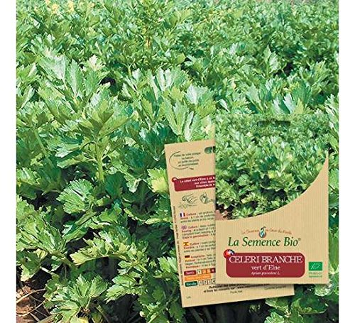 Graines de CELERI Branche Vert d'Elne BIO