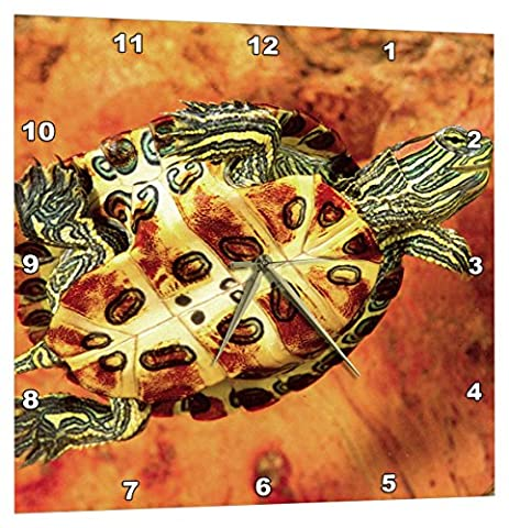3dRose Red Ear Slider Turtle Hatchling - Na02 Dno0535 - David Northcott - Wall Clock, 13 by 13-Inch