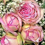 40 Cocktail Servietten Königliche Blumen Hochzeit (Royal flower)1/4 gefalzt, 3-lagig Größe offen: 25x25