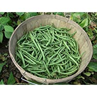 Pinkdose Blue Lake Bush beans, also called snap beans ~1/4 lb/ 350 Seeds - No staking !