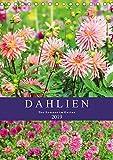 Dahlien - Der Sommer im Garten (Tischkalender 2019 DIN A5 hoch): Sommerfeeling vor der Fotokamera (Monatskalender, 14 Seiten ) (CALVENDO Natur)