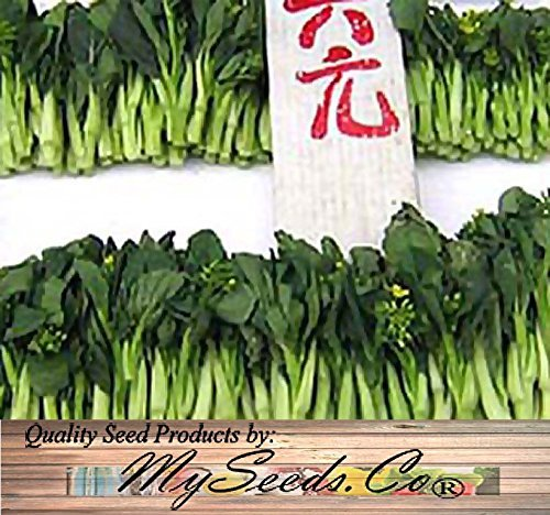 250-choy-sum-brassica-vegetable-seed-seeds-tsoi-sim-choy-sim-excellent-flavor-by-myseedsco