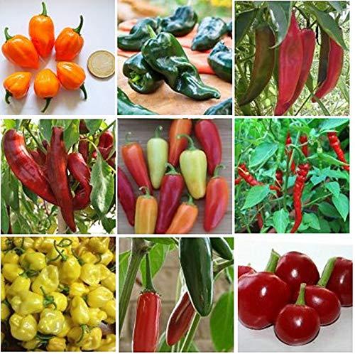 9 Arten - Hot Chili Pfeffer Mischung - 50 Samen