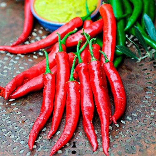 10 Stück Veredelter Chili Samen aromatische Chili-Peperoni Scharf Bio Saatgut Paprika,Pflegeaufwand gering