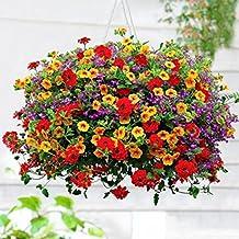 ncient 200 semillas de morning glory de jardn colgante semillas de flores plantas raras para balcn - Plantas Colgantes De Interior