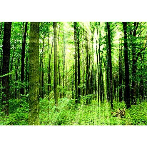 Vlies Fototapete 350x245 cm PREMIUM PLUS Wand Foto Tapete Wand Bild Vliestapete - SUNLIGHT FOREST - Wald Bäume Sonnenstrahlen grün Ruhe - no. 061 -
