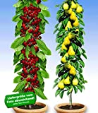 BALDUR-Garten Säulenobst-Duo
