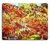 luxlady Gaming Mousepad Bild-ID: 22546435Herbst Ahorn Blätter in Garten mit Retro Filter Effekt