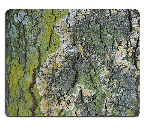 jun-xt-alfombrilla-de-ratn-textura-de-corteza-musgo-lquenes-rbol-de-goma-natural-material-imagen-337