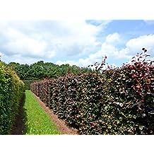 Garten Ehren suchergebnis auf amazon de für garten ehren